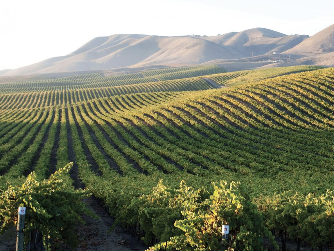 Cambria Vineyards in Santa Maria Valley (c) Cambria